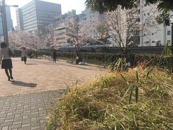 箱崎川第一公園001.jpg