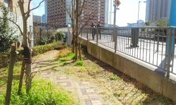 芝浦西運河緑地004.jpg