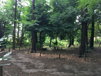 西野川樹林地003.jpg
