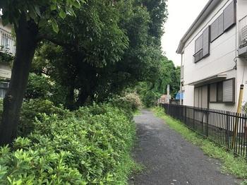 野川緑地公園001.jpg