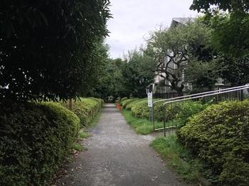 野川緑地公園017.jpg